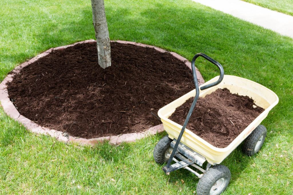 Mulch work around the trees growing in the backyard during springtime with a small yellow metal wheelbarrow full of organic mulch from the nursery standing alongside a round flowerbed around a sapling