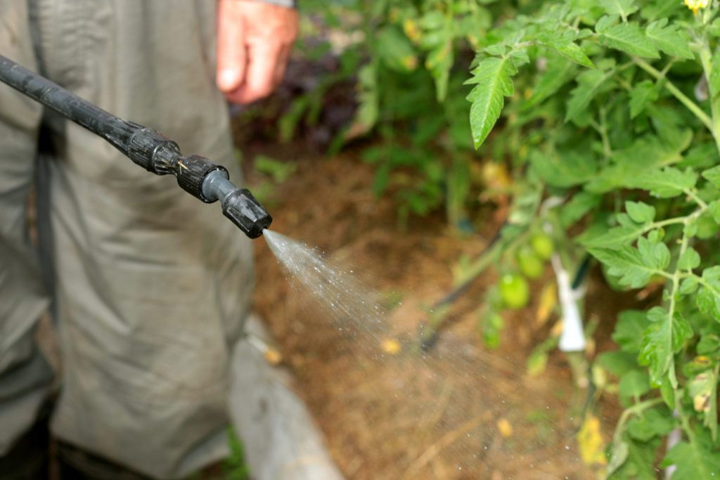 spray tomatoes from pests