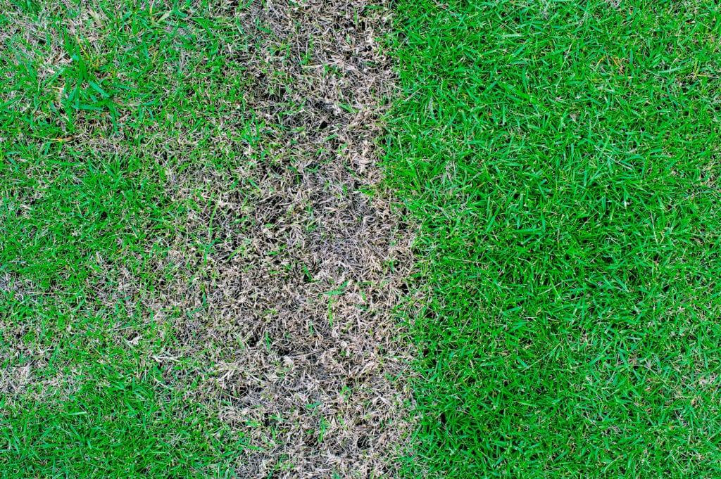 Brown Spots On Lawn Denver Co Brown Spot Lawn Repair